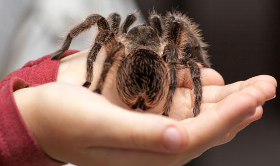 spider-550