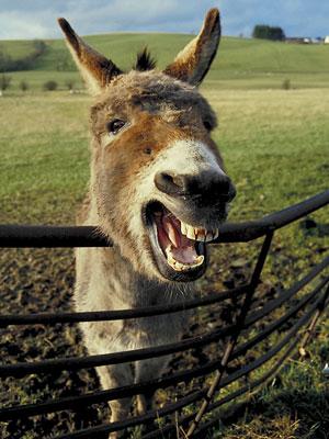 donkey-big.jpg