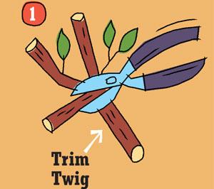 twig-1