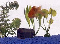 goldfish-200×148