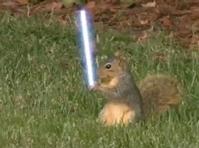 JediSquirrel