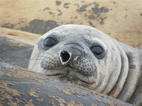 SealPhoto