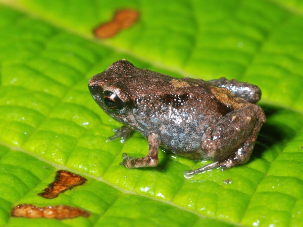 tiny-frogs