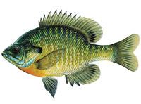 fish-200×148