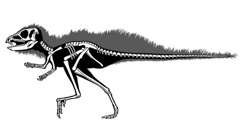 Heterodontosaurids