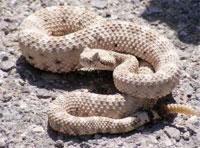 snake-200x148