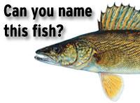 fishquiz-200×148