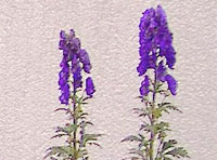 flower-200x148