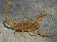 scorpion-200x148
