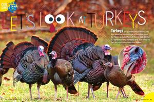 Look at Turkeys