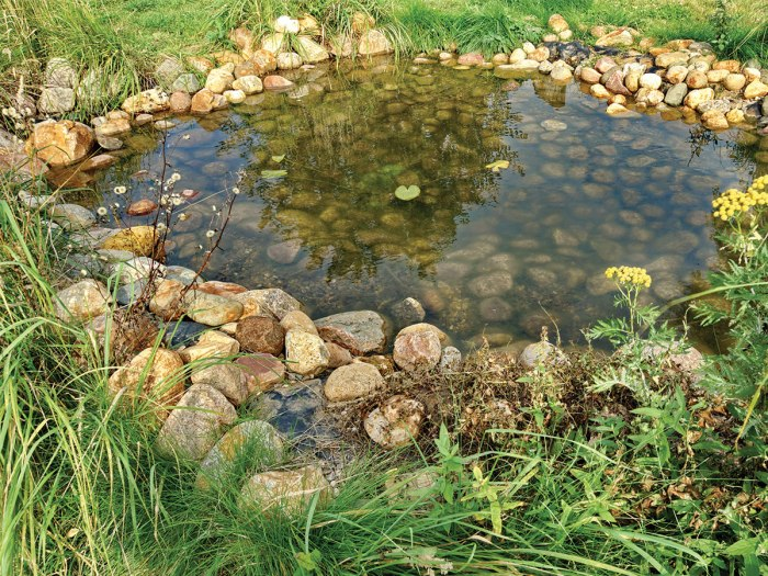 How to Build a Frog Pond in Your Backyard - Boys' Life ...