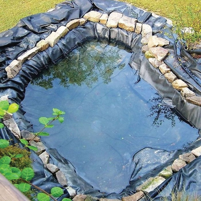 How to Build a Frog Pond in Your Backyard - Scout Life ...