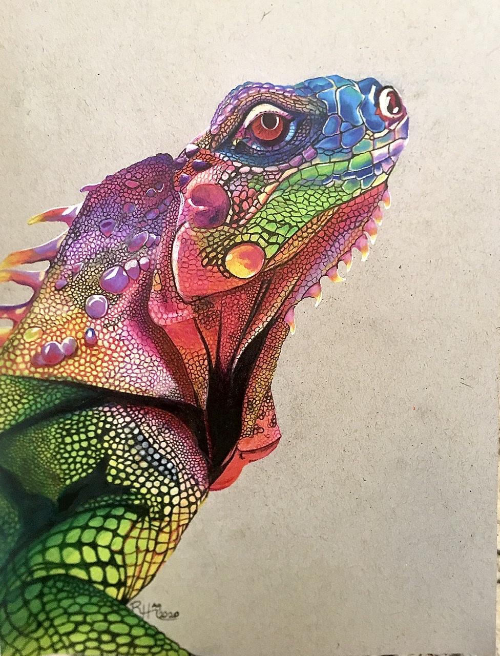 Iguana rainbow