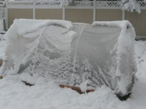 Hoop house in the winter